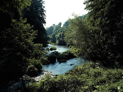 Harz - Fluss im Wald