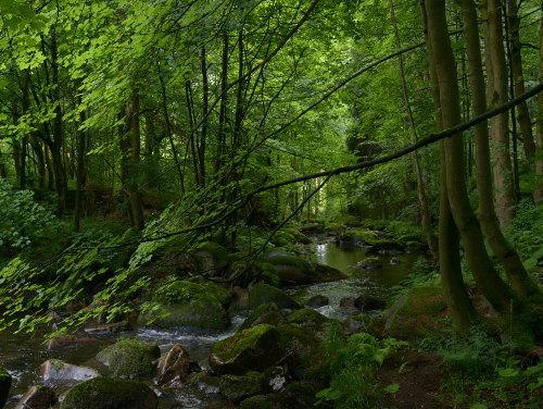 Harz - Waldbach