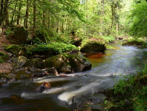 Harz - Wald, Bachlauf