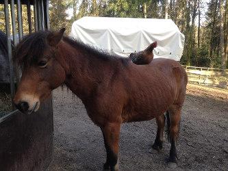 Psychosomatische Fachklinik Dr. Barner - tiergestützte Therapie mit Pferden