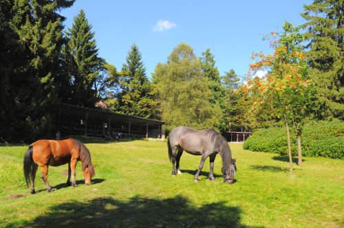 Pferde, Reittherapie - Krankenhaus Sanatorium Dr. Barner