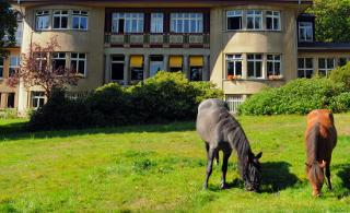 Psychosomatisches Krankenhaus Sanatorium Dr. Barner - Pferde, Haupthaus